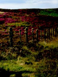 Grundstück in Schottland