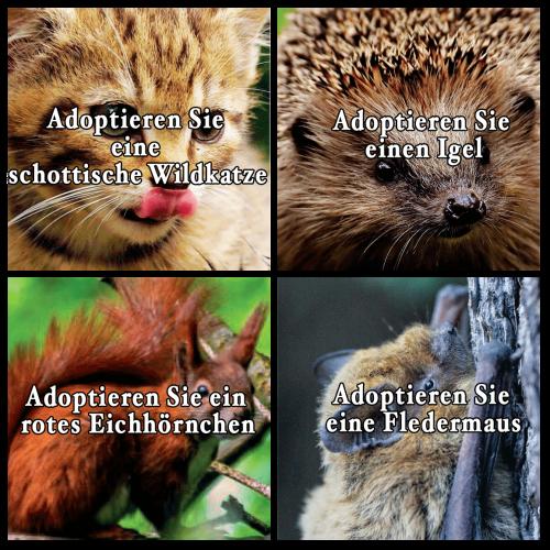Tierpatenschaft in Schottland